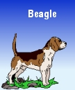 Beagle - e-business strategy and implementation